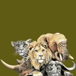 tisk tricek dvur kralove zoo